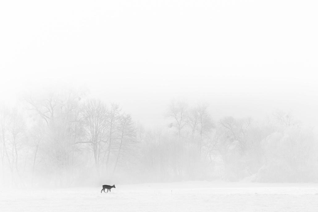 A cold winter morning in Harghita. Nagykadacs, Harghita, Romania, 2016.